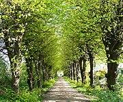 Zufahrt über die Lindenallee