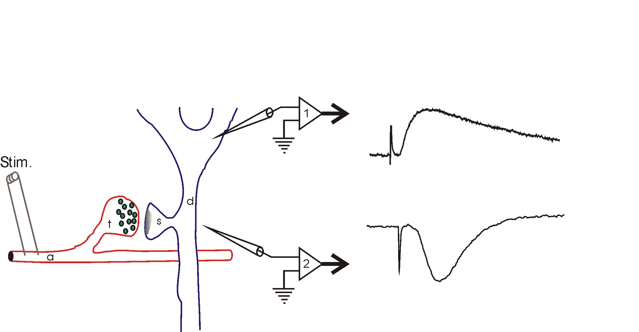 File Schematic diagram of the coding strategy of SFTS strain DBM virus besides Copicat also File Fermi dirac distr as well Dann Huff Classic Wiring Page 02 likewise File Field potential schematic. on schematic diagram