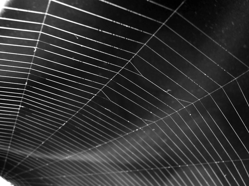 Spider web taken or created by Fir0002