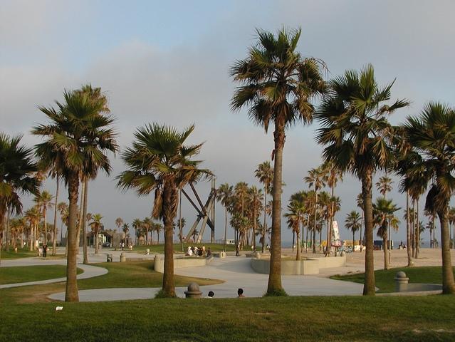 Palm trees along the Venice Boardwalk