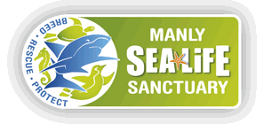 manly sea life sanctuary wikipedia. Black Bedroom Furniture Sets. Home Design Ideas
