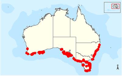 Penguin habitat map - photo#39