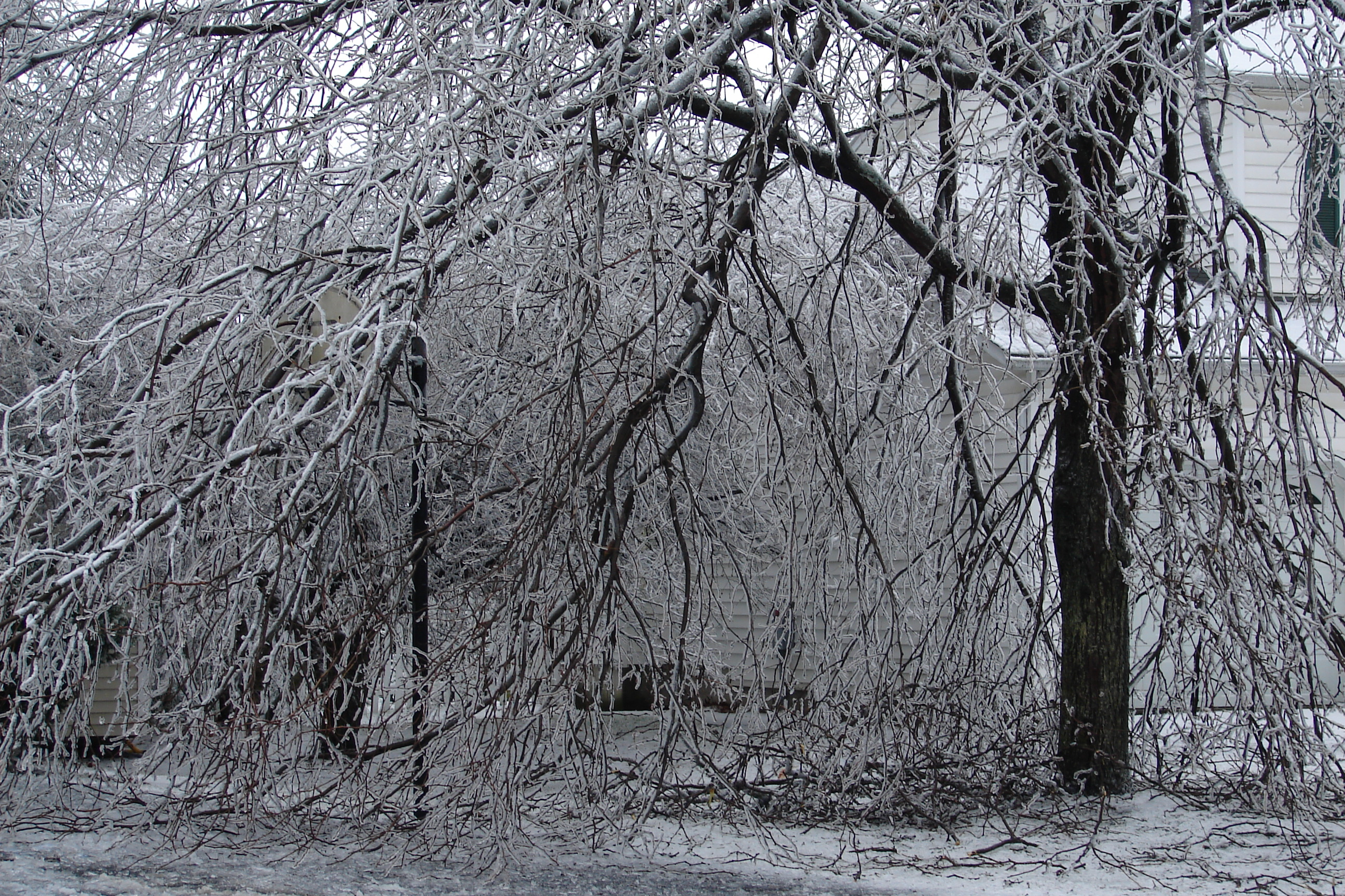 Ice Storm Wikiwand