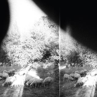 A lo-fi, black and white image of animals grazing, with trees in the background