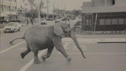 Are not elephant having sex hardcore pity