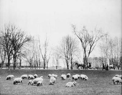 Sheep Meadow-Central Park-NYC.jpg