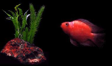 hp mopy fish