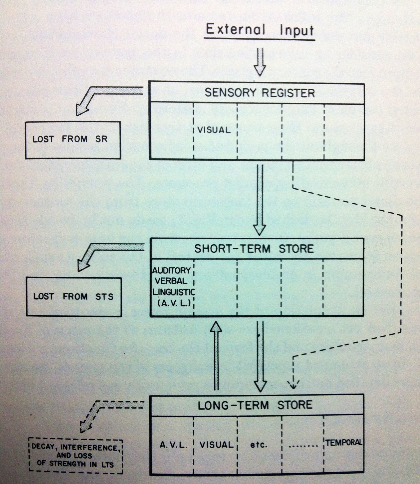 the multi store model atkinson and Atkinson and shiffrin (1968) developed the multi-store model of memory (msm), which describes flow between three permanent storage systems of memory: the.