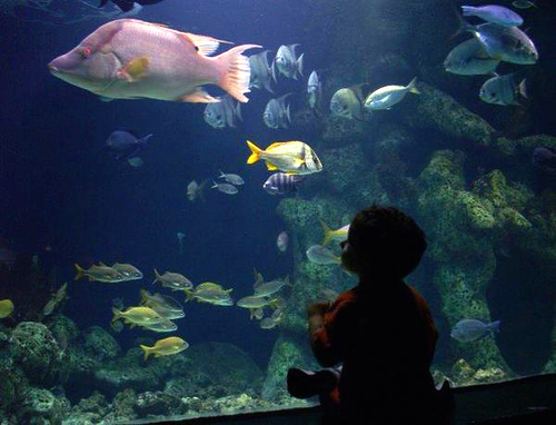 File Oklahoma Aquarium Boy Jpg Wikipedia