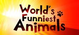 <i>Worlds Funniest Animals</i> American reality television program