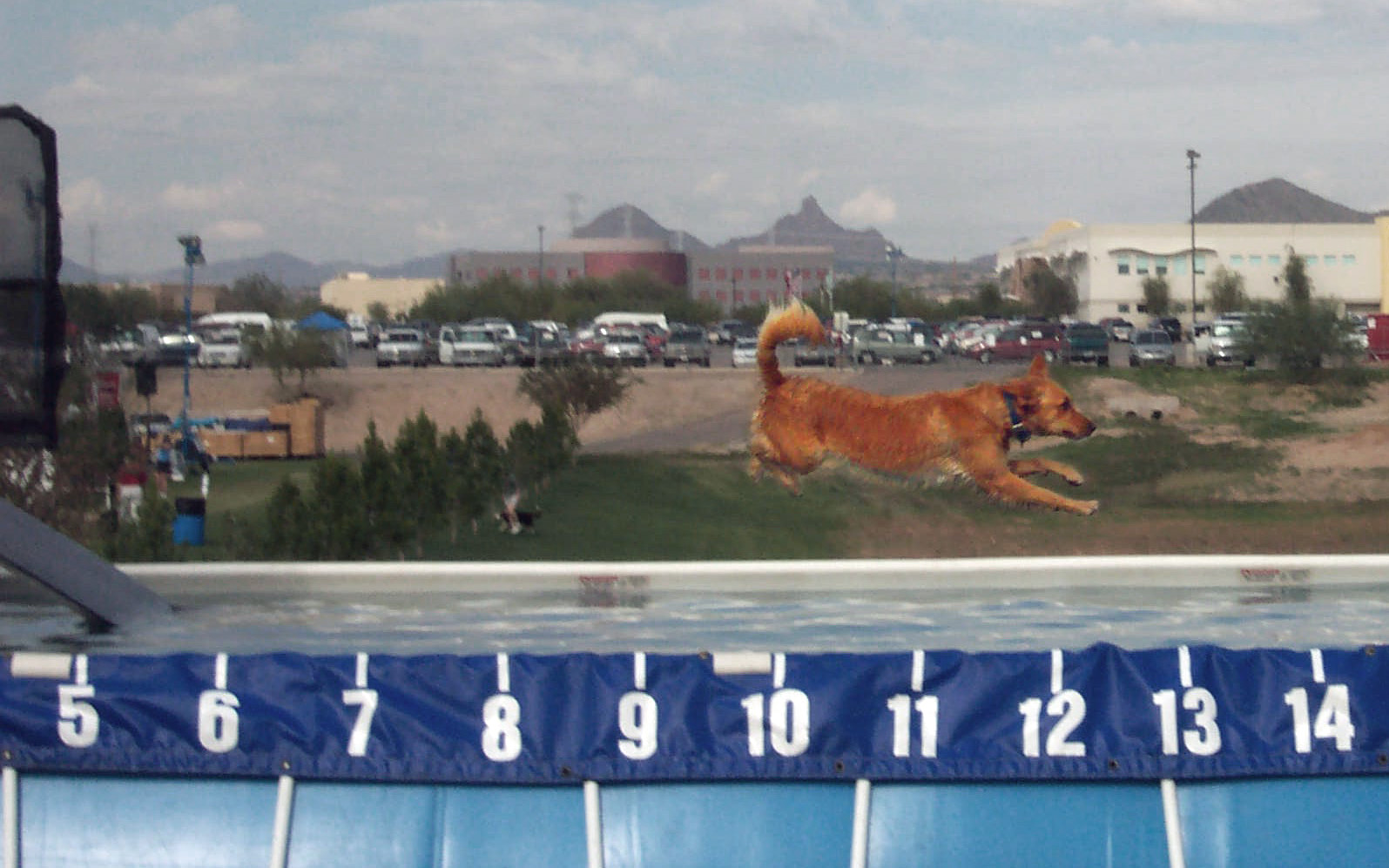 Image Result For Dog Jumps Into