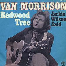 Redwood Tree (song) single by Van Morrison