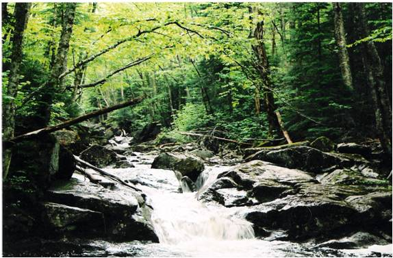 Figure 1. A riparian forest in the White Mountains, New Hampshire (USA), an example of ecosystem ecology