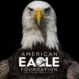 american eagle foundation wikipedia rh en wikipedia org American Eagle Foundation Facebook Page American Eagle Foundation TN