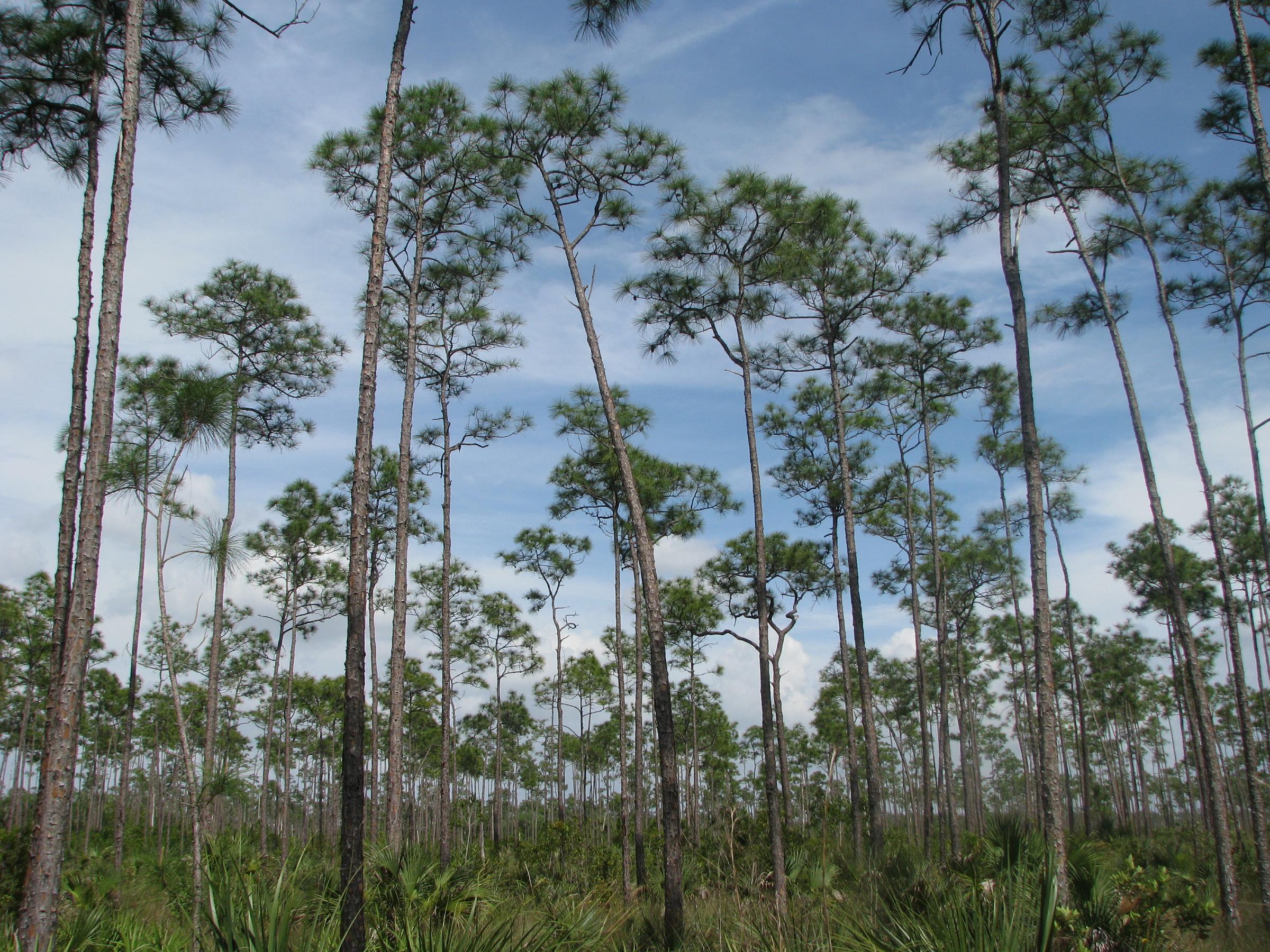 Everglades_Pinelands.jpg