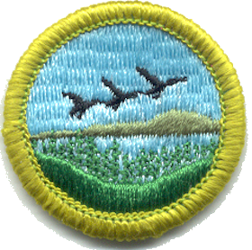 Merit badge (Boy Scouts of America) award of Boy Scouts of America