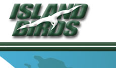 Island Birds Charter airlines in the Caribbean