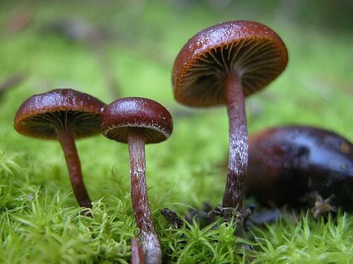 Magic Mushroom The Rotmg Wiki – Desenhos Para Colorir