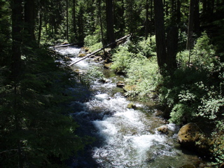 A Small Stream, Part of the Headwaters to the Rogue River OR