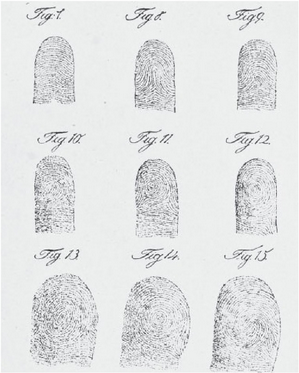 Nine fingerprint patterns identified by Jan Evangelista Purkyne. Nine fingerprint patterns Purkyne.png