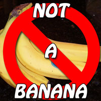 Yes, we have no bananas