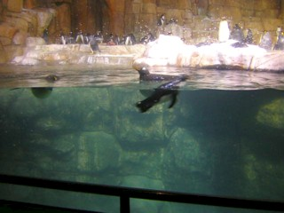 Henry doorly zoo and aquarium the best tourist place in the world henry doorly zoo and aquarium wikipedia the free encyclopedia auto design tech omahas publicscrutiny Image collections