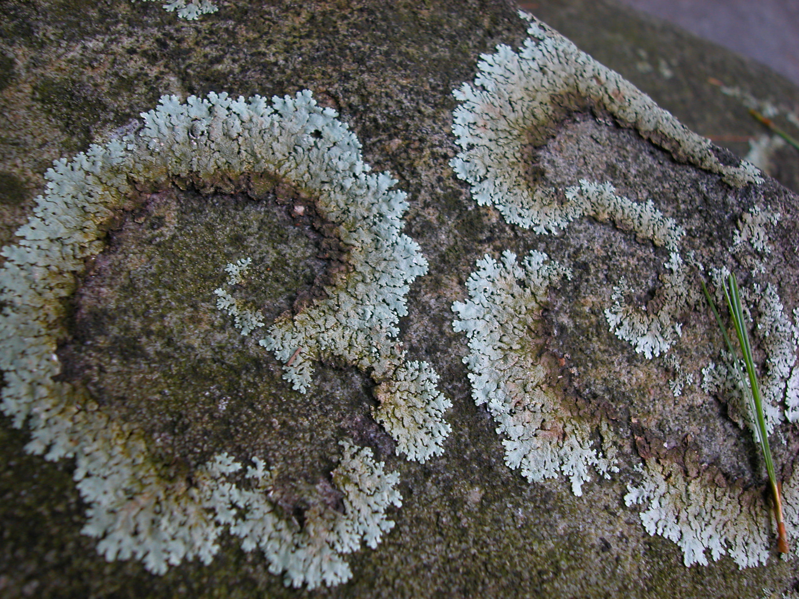 File:Plants flowers ice rocks lichens 230.jpg - Wikipedia