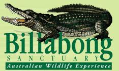 What is a billabong?