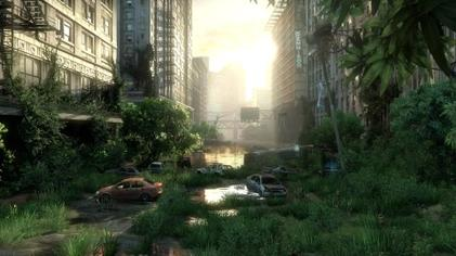 A location, formerly a city street, with overgrown plants, broken cars and flooding.