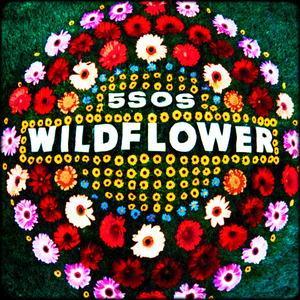 Wildflower 5 Seconds Of Summer Song Wikipedia