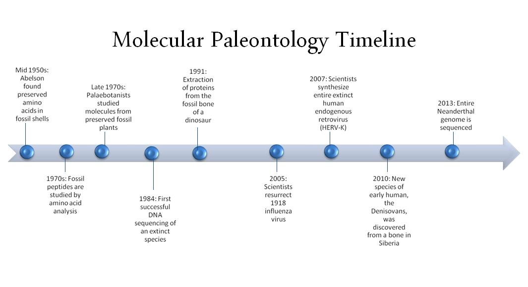 Molecular paleontology wikipedia a visual graphic of the events listed in the timeline section ccuart Image collections