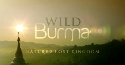 Wild Burma Nature S Lost Kingdom Elusive Elephants