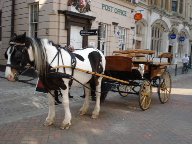 Image result for horse drawn carriage