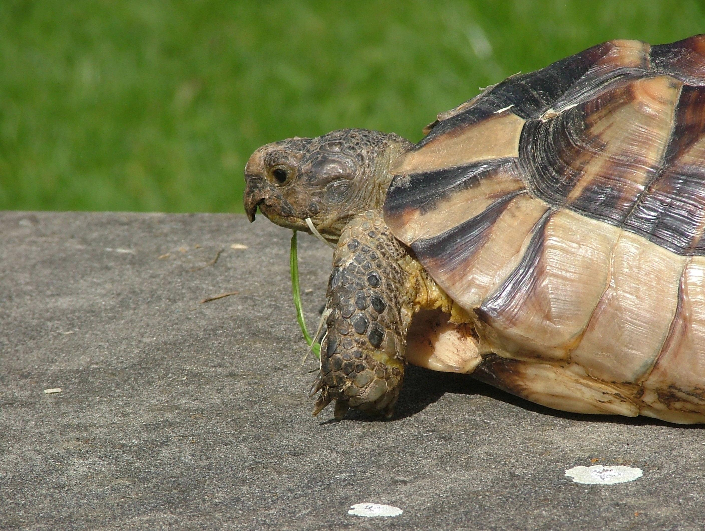 File:Beak of tortoise.jpg - Wikipedia