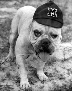 Bully (mascot) mascot of Mississippi State University