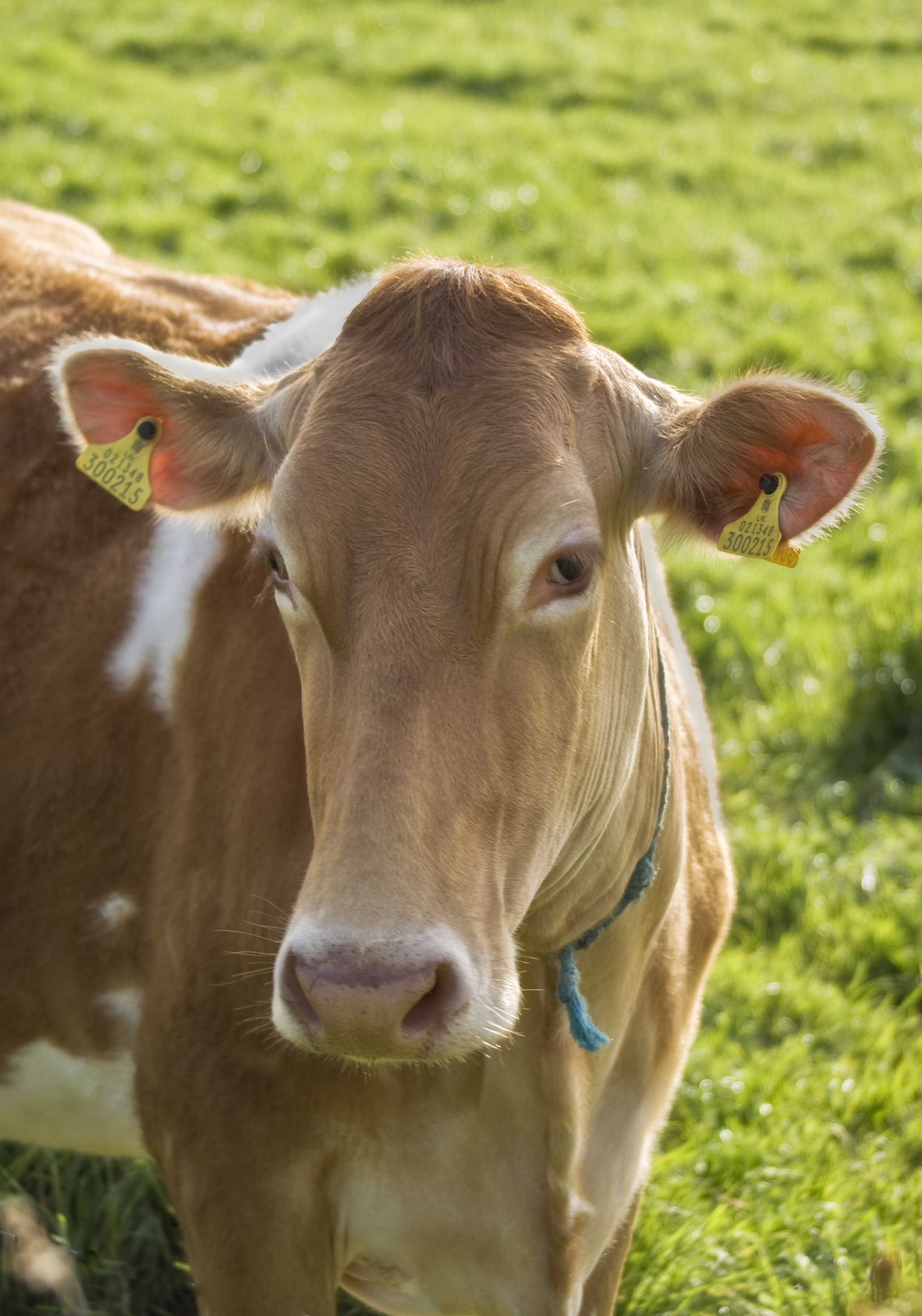 Branding, It's Not Just For Cows, But For Law Firms and Lawyers, Too