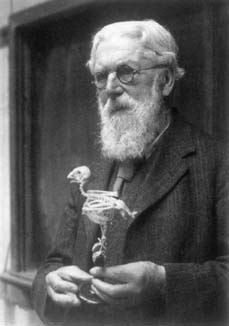 D'Arcy Thompson holding a skeleton of a parrot