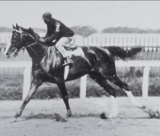 Alan A Dale Horse Wikipedia