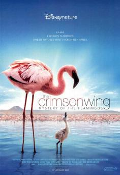 Picture of a movie: The Crimson Wing: Mystery Of The Flamingos