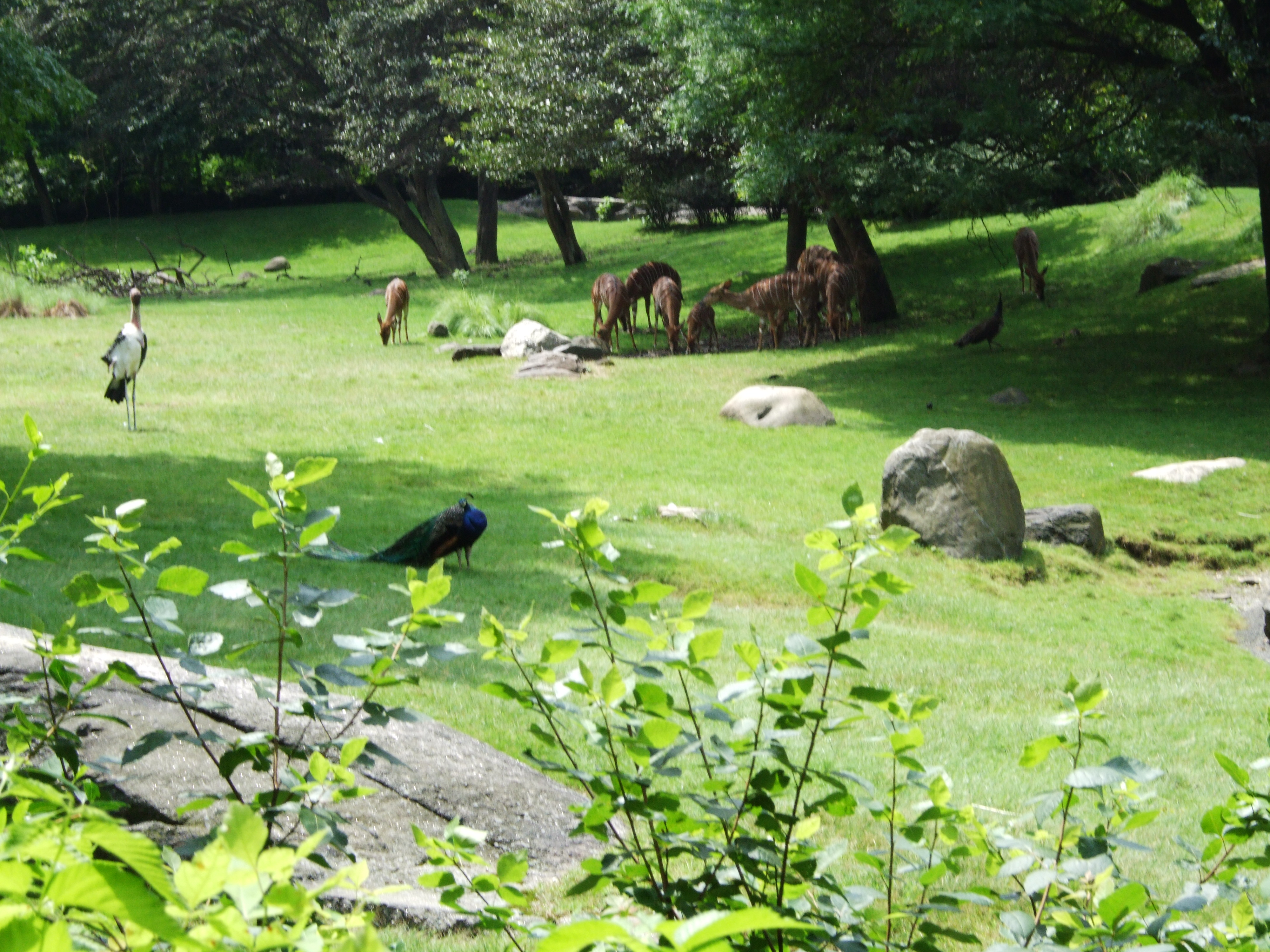 File:Bronx Zoo 102.JPG - Wikipedia, the free encyclopedia