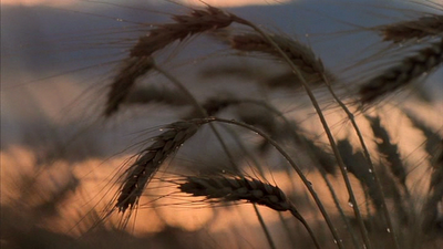 Days Of Heaven Wikipedia - Man filmed this heaven for 7 days