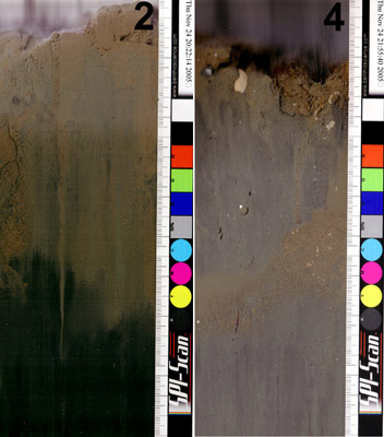 Here are two portions of sediment profiles taken 1 km from an aquaculture facility along the tidal current (left) and across (right).  The right hand scale divisions are 1 mm apart.