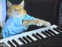 Cats Funny Piano