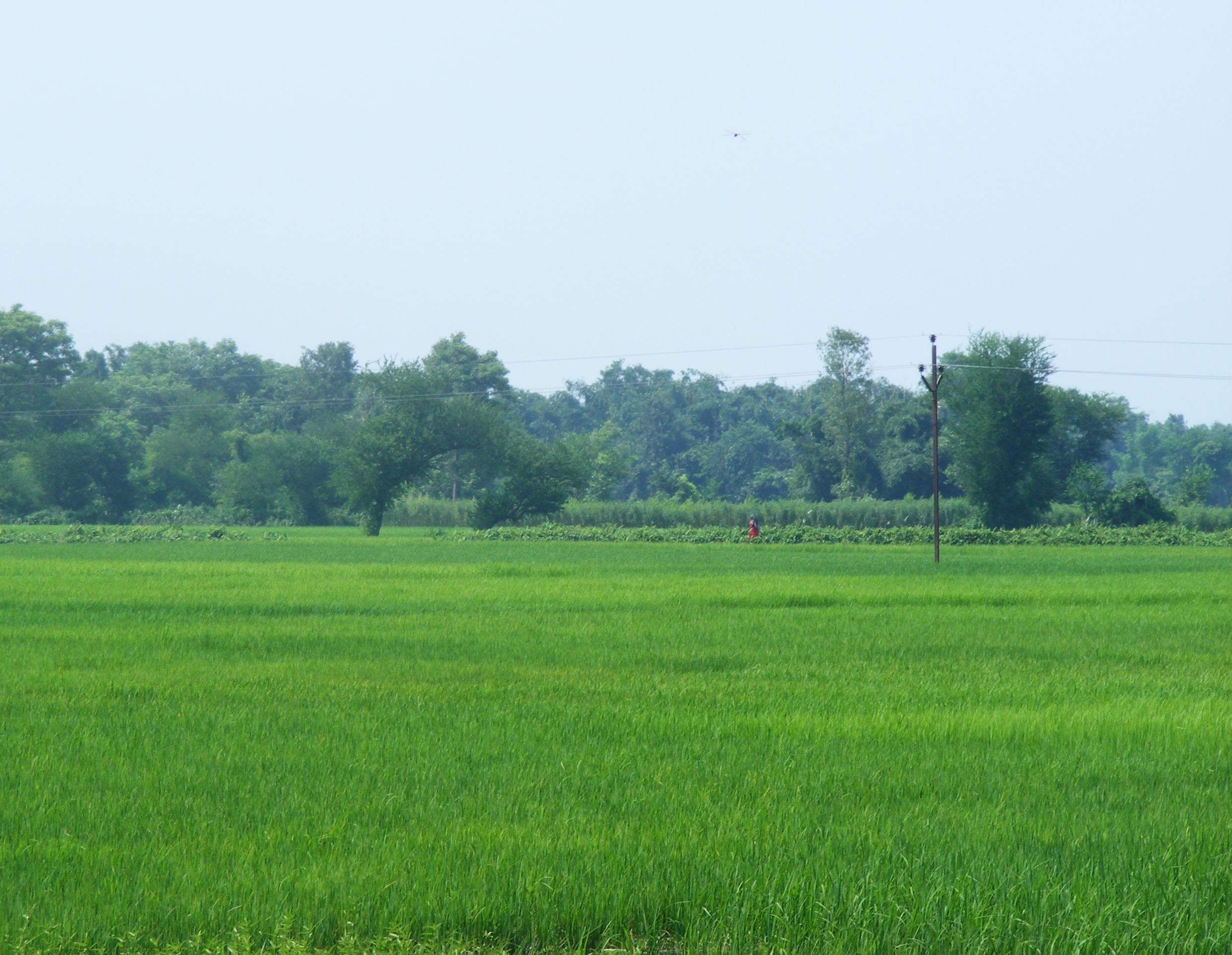 paddy field Download paddy field stock photos affordable and search from millions of royalty free images, photos and vectors thousands of images added daily.