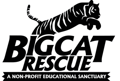 Big Cat Rescue Wikipedia