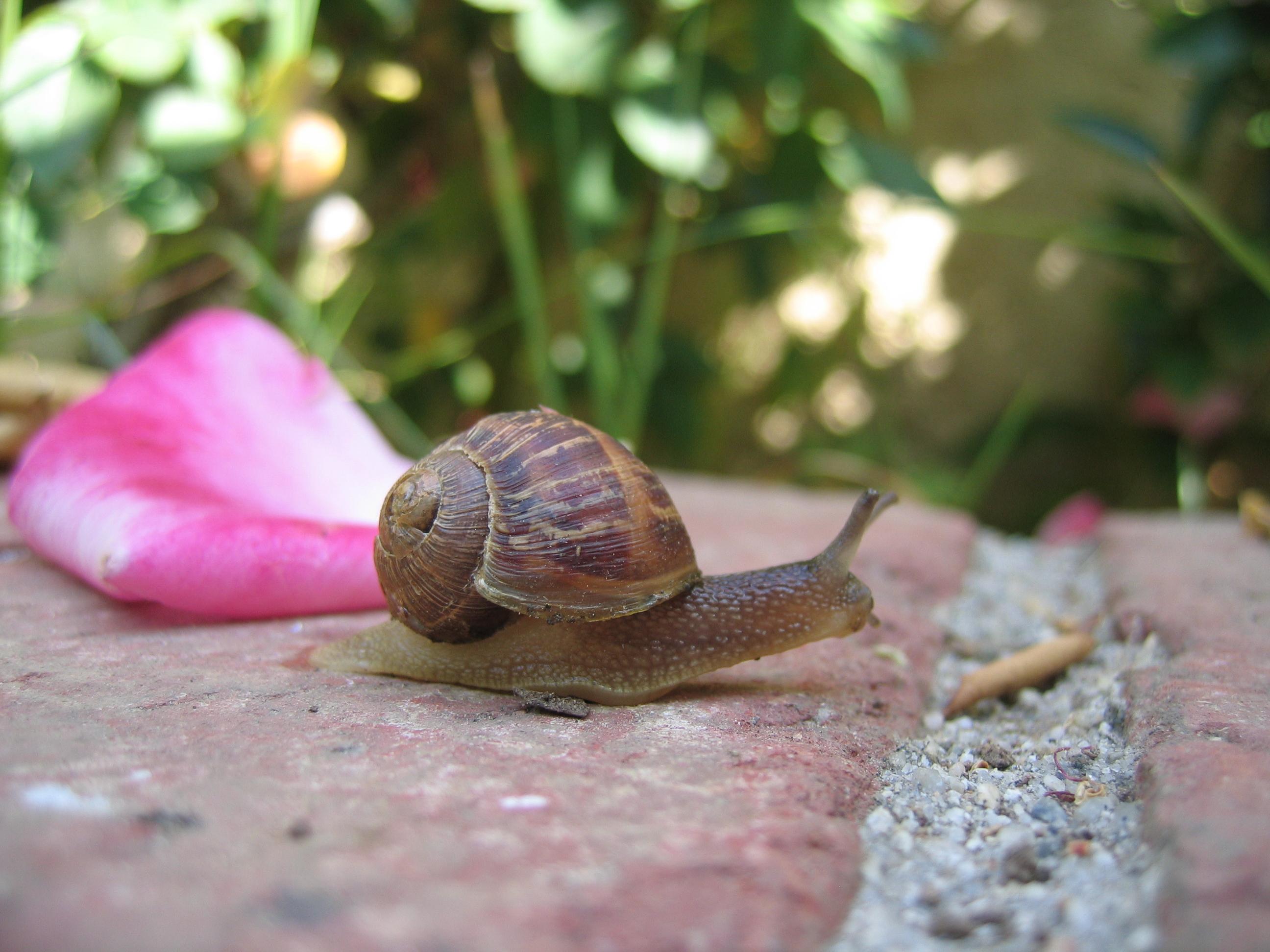 Snaily the Sea Snail