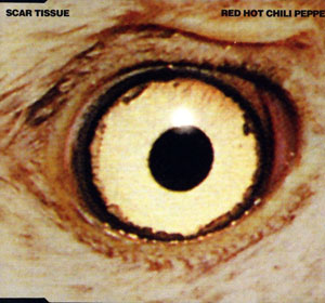 Scar Tissue 1999 single by Red Hot Chili Peppers