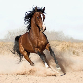 Horse ebooks.jpg
