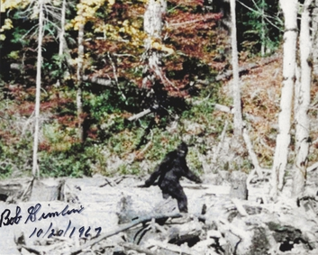 1d59c18af Frame 352 of the film, alleged to depict a female Bigfoot, known informally  as