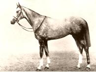 Airborne (horse) Irish-bred Thoroughbred racehorse